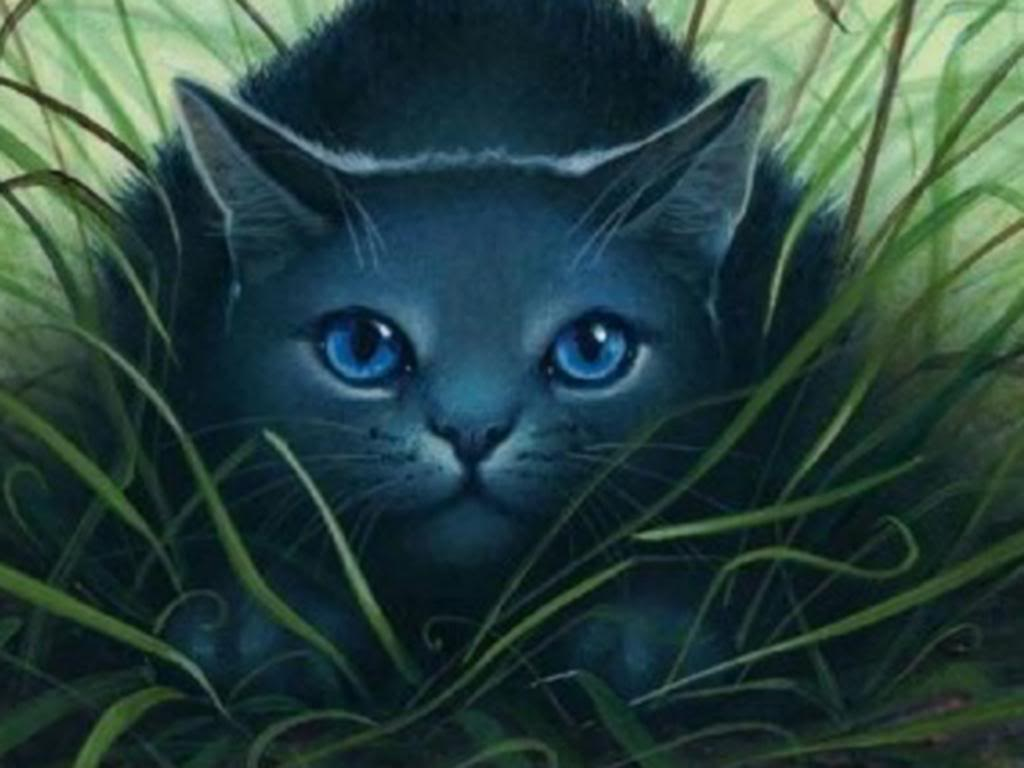 My Top Collection Warrior cats wallpapers 1024x768
