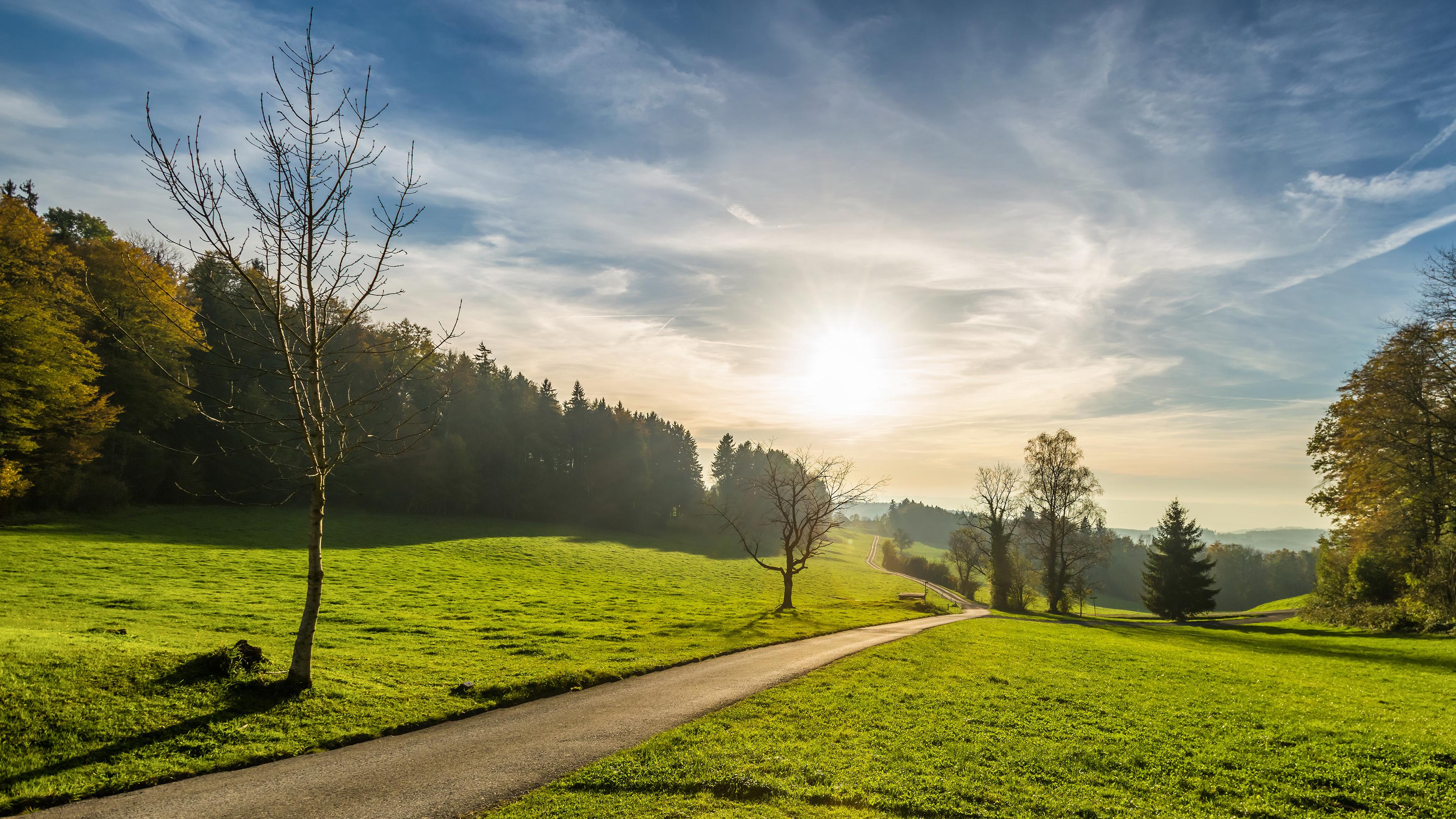 дорога, солнце, трава, деревья  № 3117713  скачать