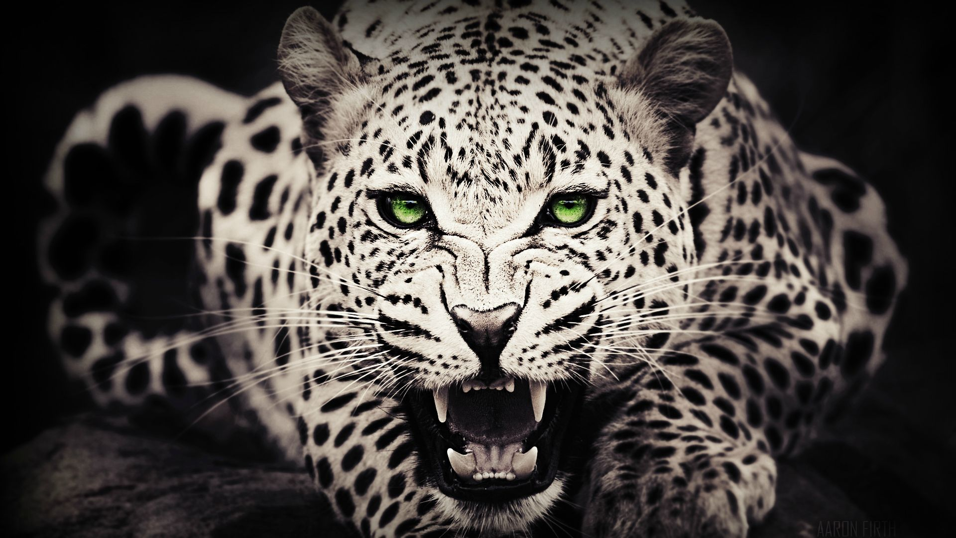 Leopard Wallpaper Wallpupcom 1920x1080