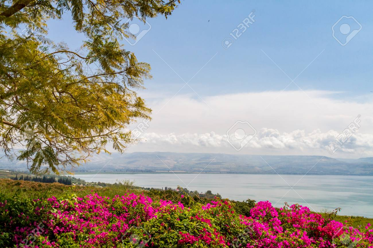 Top View Of The Sea Of Galilee The Kinneret Lake From The Mount 1300x866