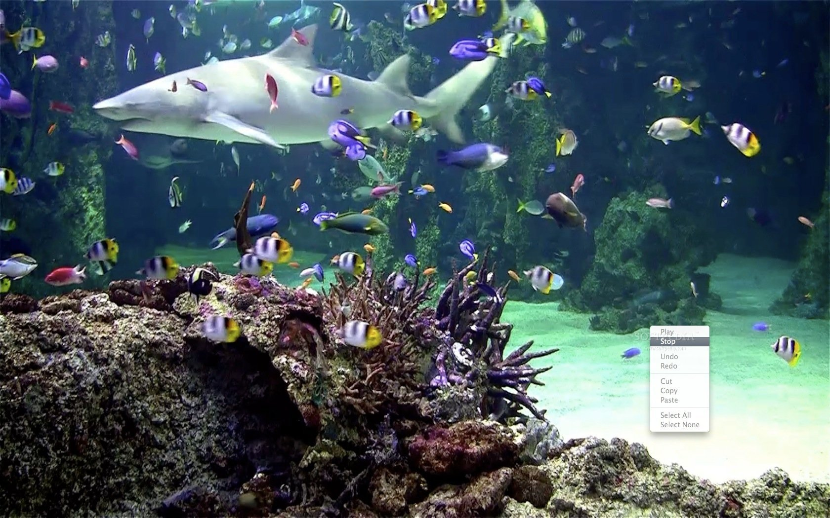 Live Aquarium Wallpaper Windows 7 Wallpapersafari