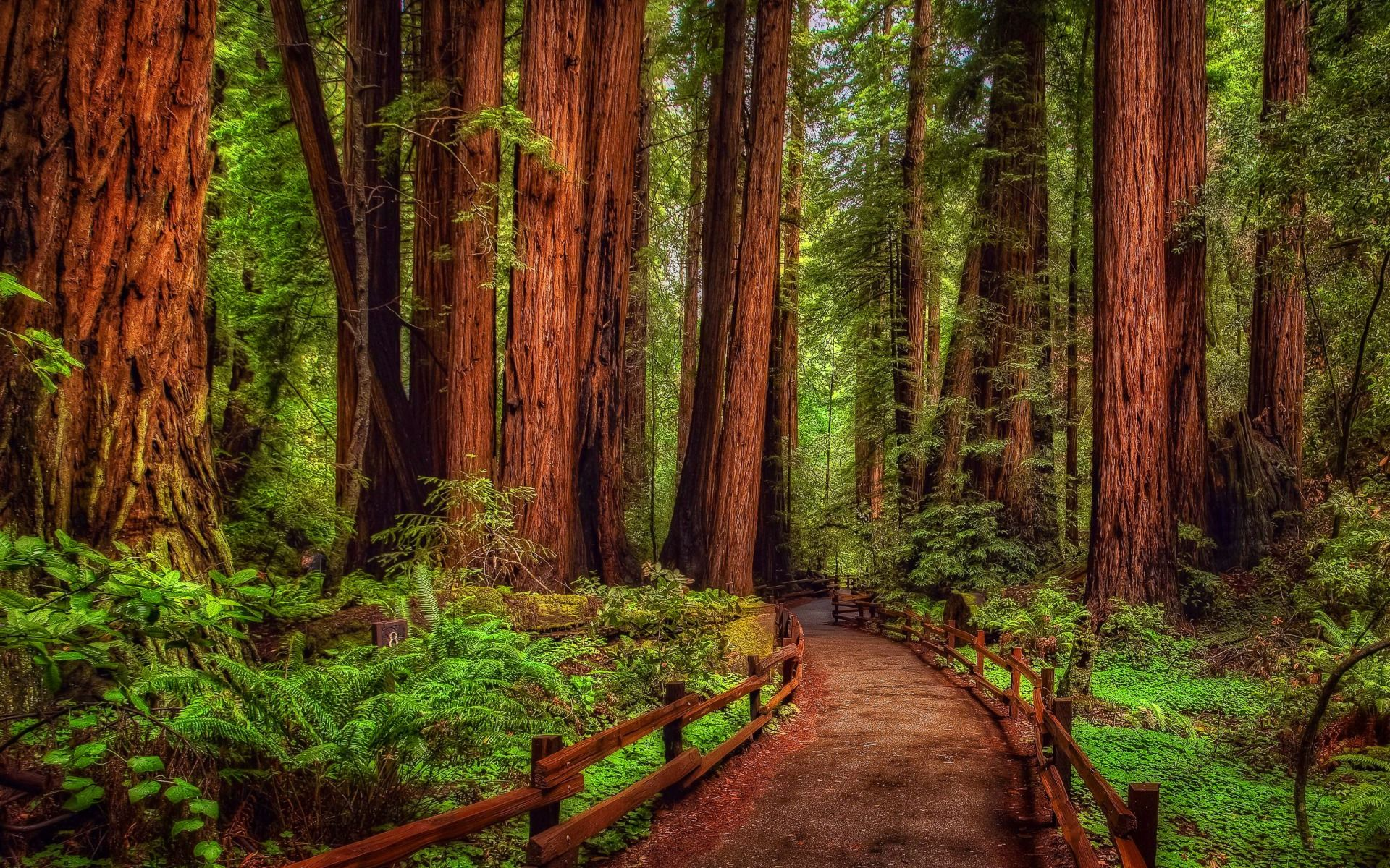 Redwood Forest Wallpapers   Top Redwood Forest Backgrounds 1920x1200