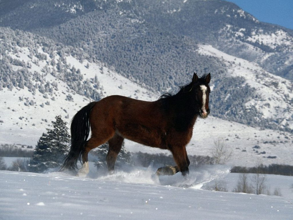 horse running in the snow   screensavers and funny pictures animals 1024x768