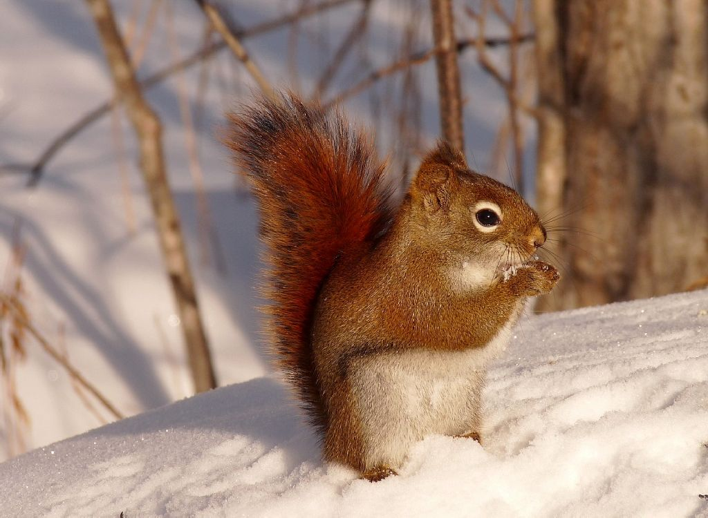 Cute Squirrel Wallpaper - WallpaperSafari