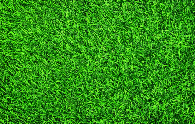 Wallpaper grass background lawn green summer grass green 1332x850