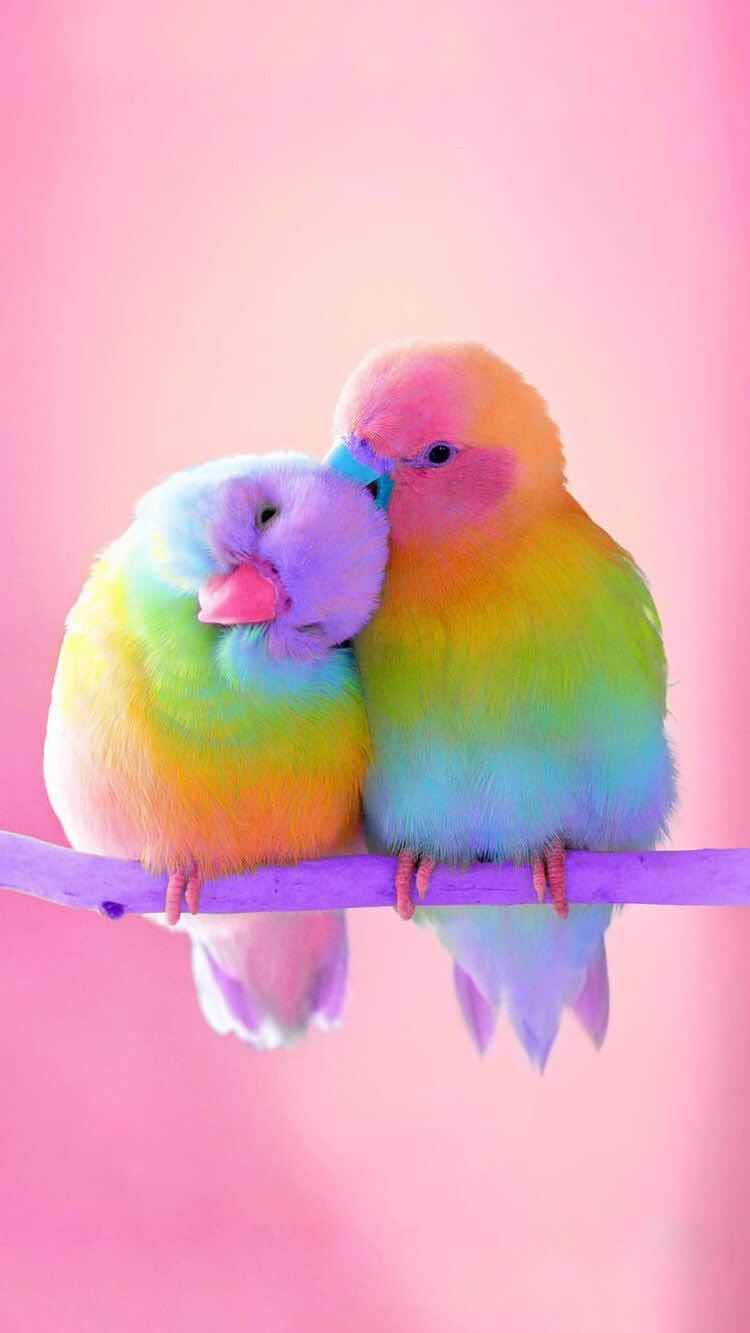iPhone and Android Wallpapers Colorful Birds Wallpaper for iPhone 750x1333
