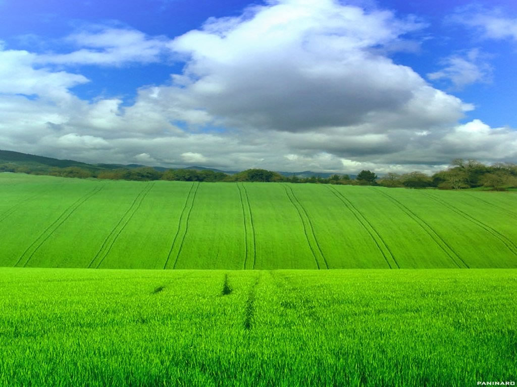 Free Download Beautiful Grassland 2 Wallpaper   Wallpapers Area