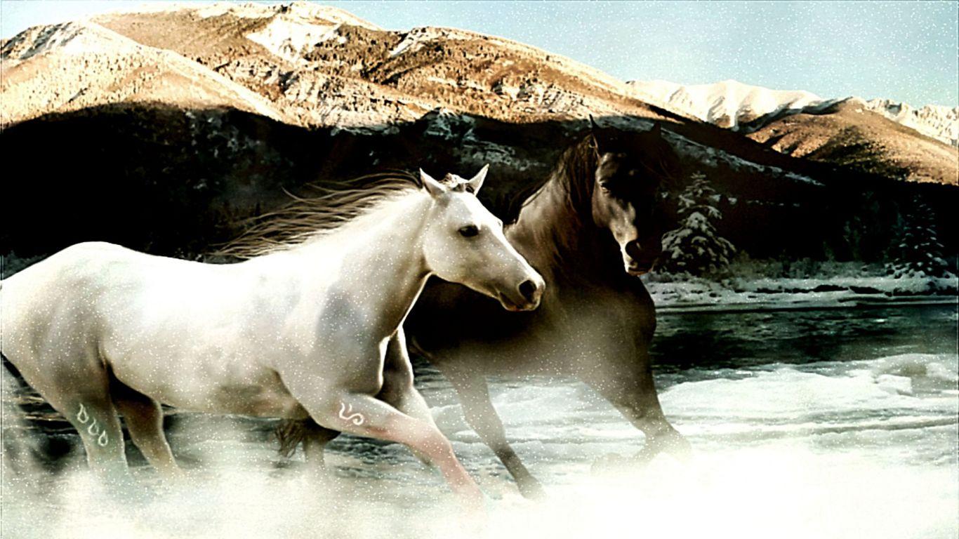 Black And White HorseHorse Design Black And WhiteOutlinesWhite Horse 1366x768