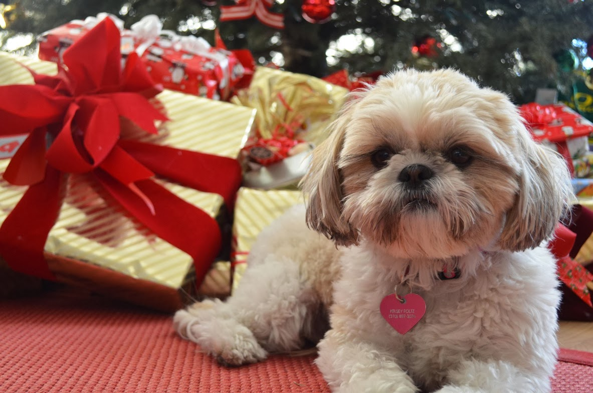 Shih Tzu Christmas Cards