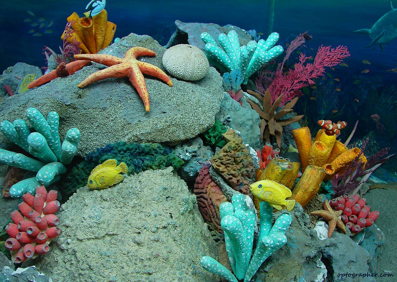 Sea life Images Beautiful Cool Wallpapers 1280x909