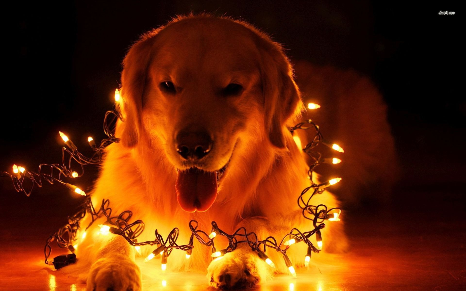 Animals Zoo Park Cute Dogs Wallpapers For Desktop Cute: Christmas Animal Wallpaper For Desktop