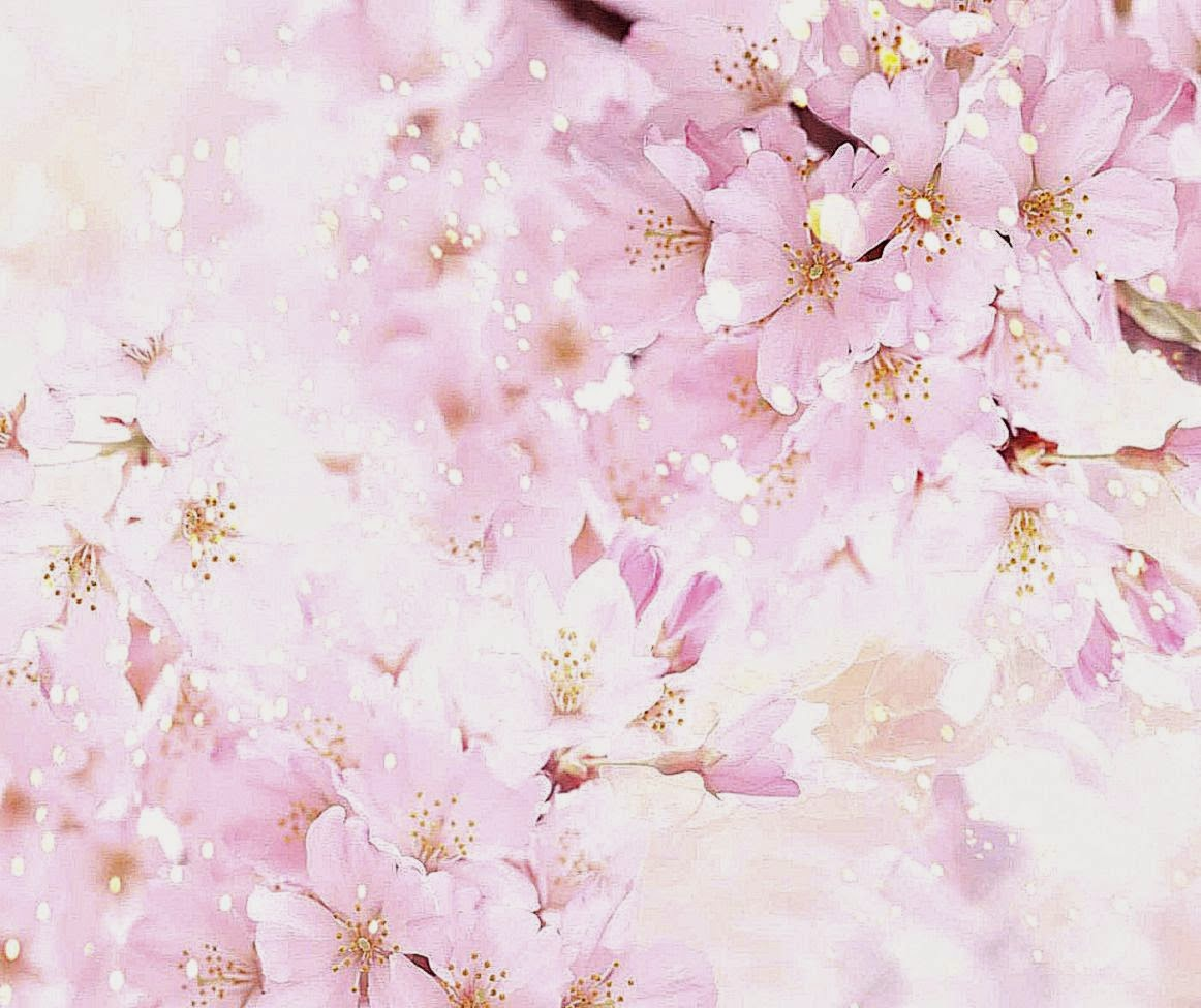 Nice Flowers Background 3d Wallpapers Hd   Cherry Blossom Pastel 1162x976