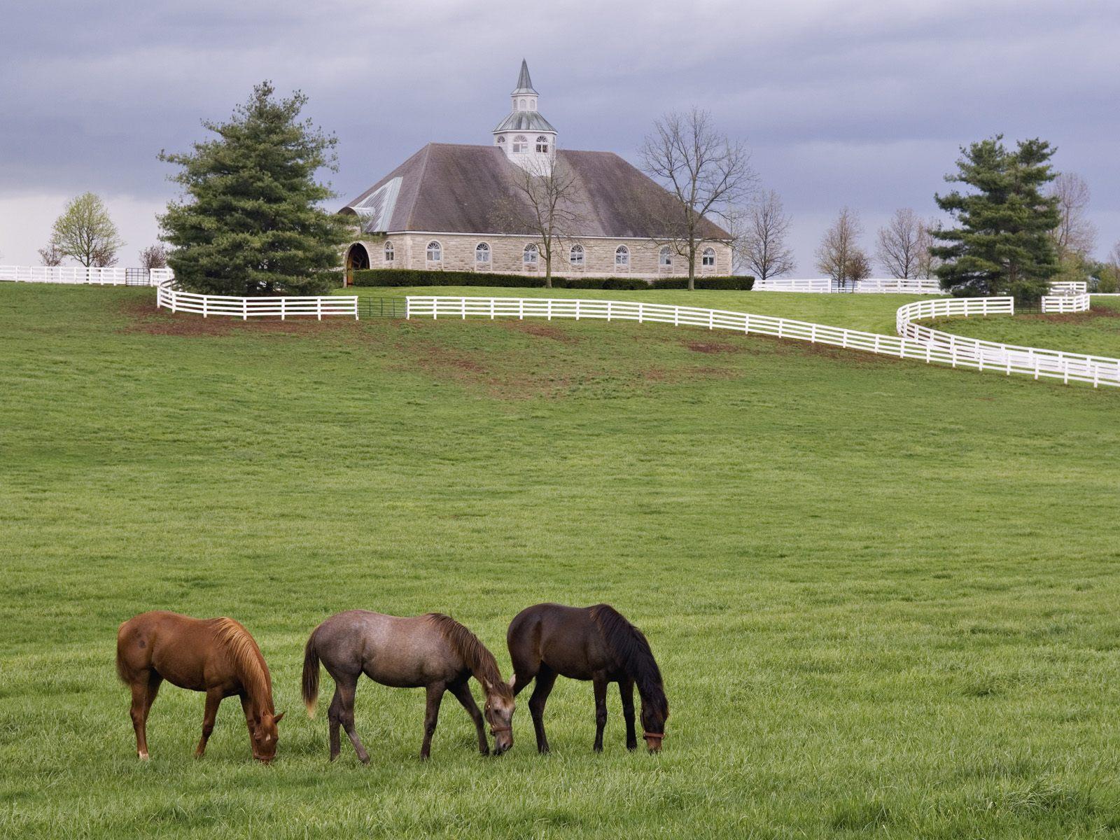 My Farm Life 2 Jeu PC   Images vidos astuces et avis 1600x1200