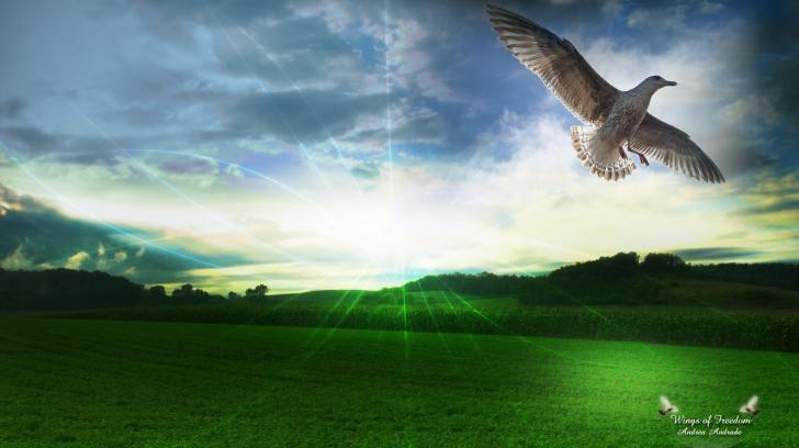 Wings of freedom   57328   High Quality and Resolution Wallpapers 728x408