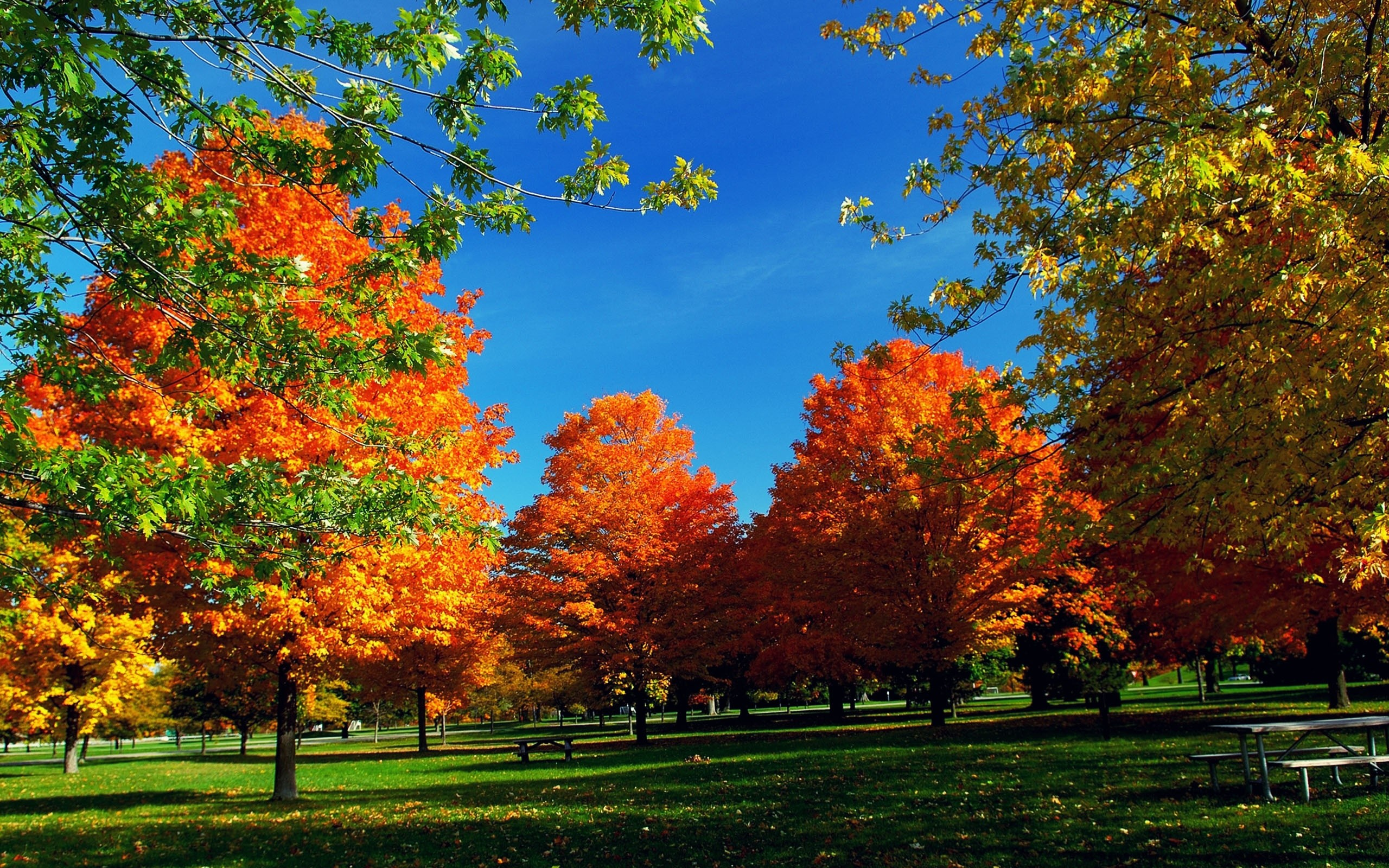 Autumn Hd Widescreen Wallpaper   Fall Trees 139225   HD 2560x1600