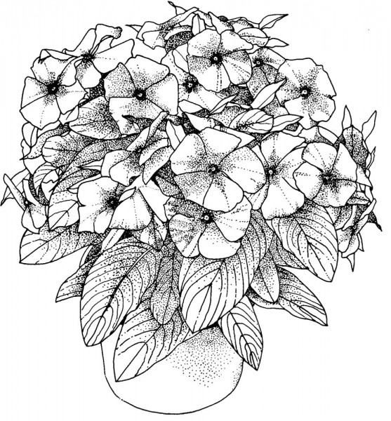 Rose Flower Coloring Pages For Grown-up || COLORING-PAGES ... | 600x557