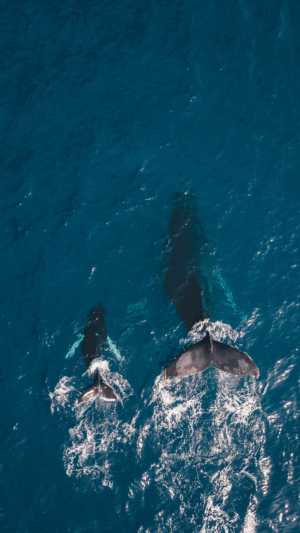 900 Whale Images Download HD Pictures Photos on Unsplash 1000x1778