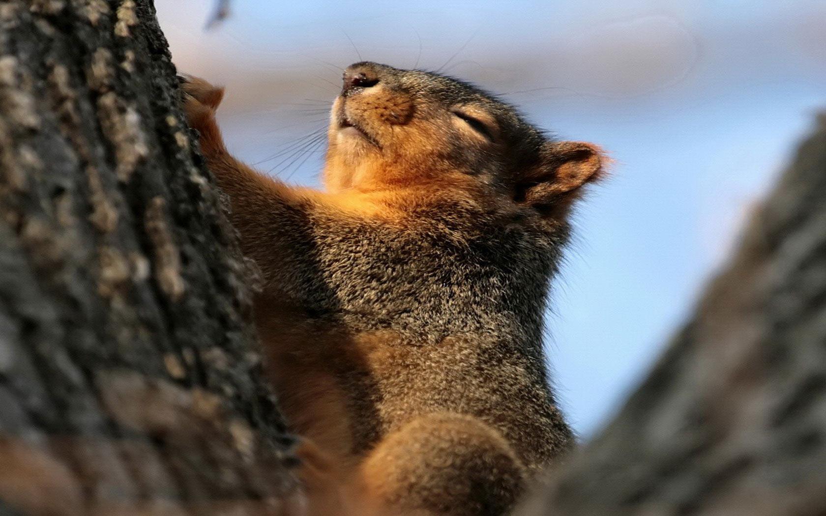 48 Screensavers And Wallpaper Squirrels On Wallpapersafari