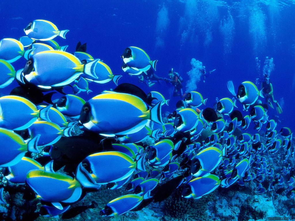Ocean Life Desktop   HD Ocean Wallpapers   Ocean Life Desktop 1024x768