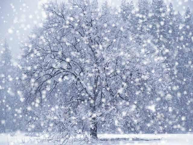 DX Winter Snow Screensaver   DX Winter Snow Screensaver is a stunning 640x480