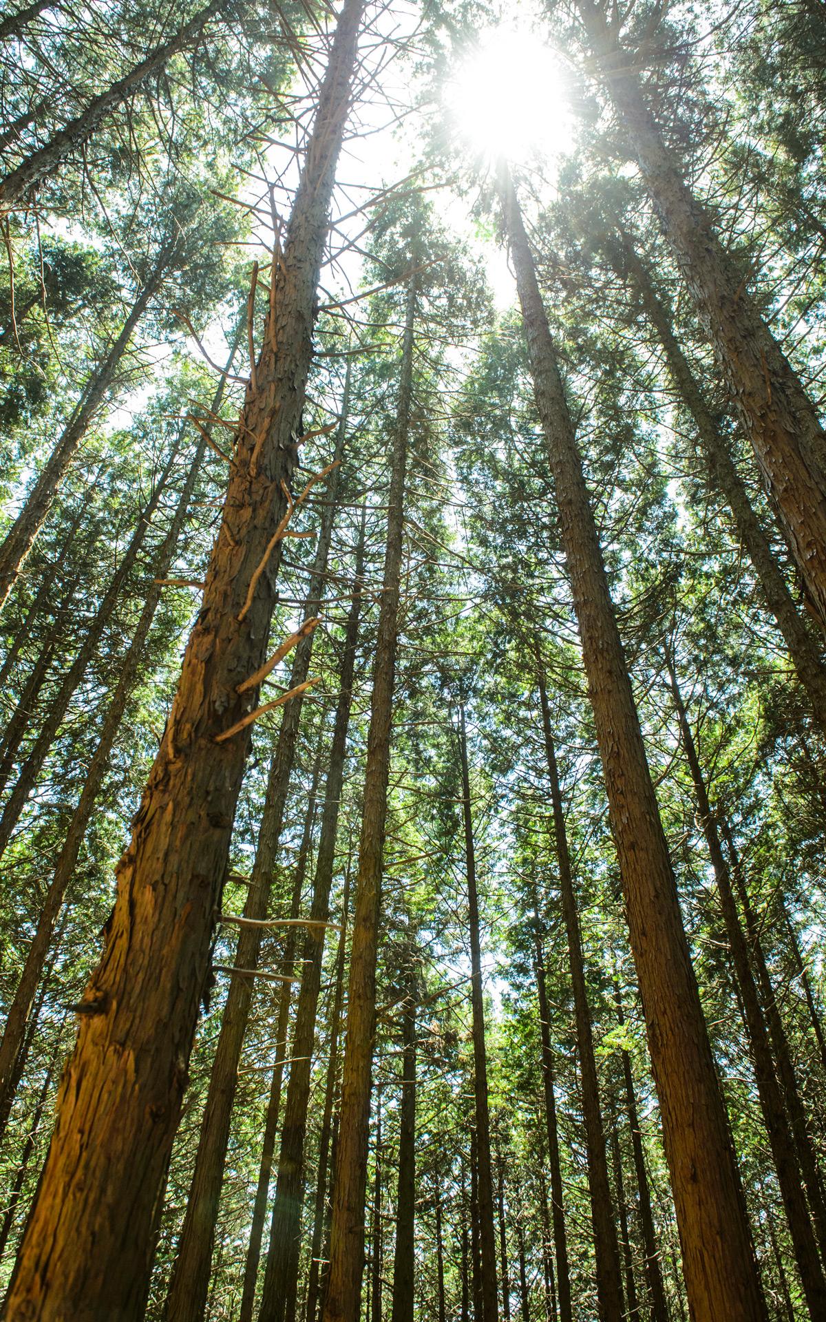 Jeffrey Friedls Blog My Mt Hiei Climb Challenge 2013 Part 2 1200x1920