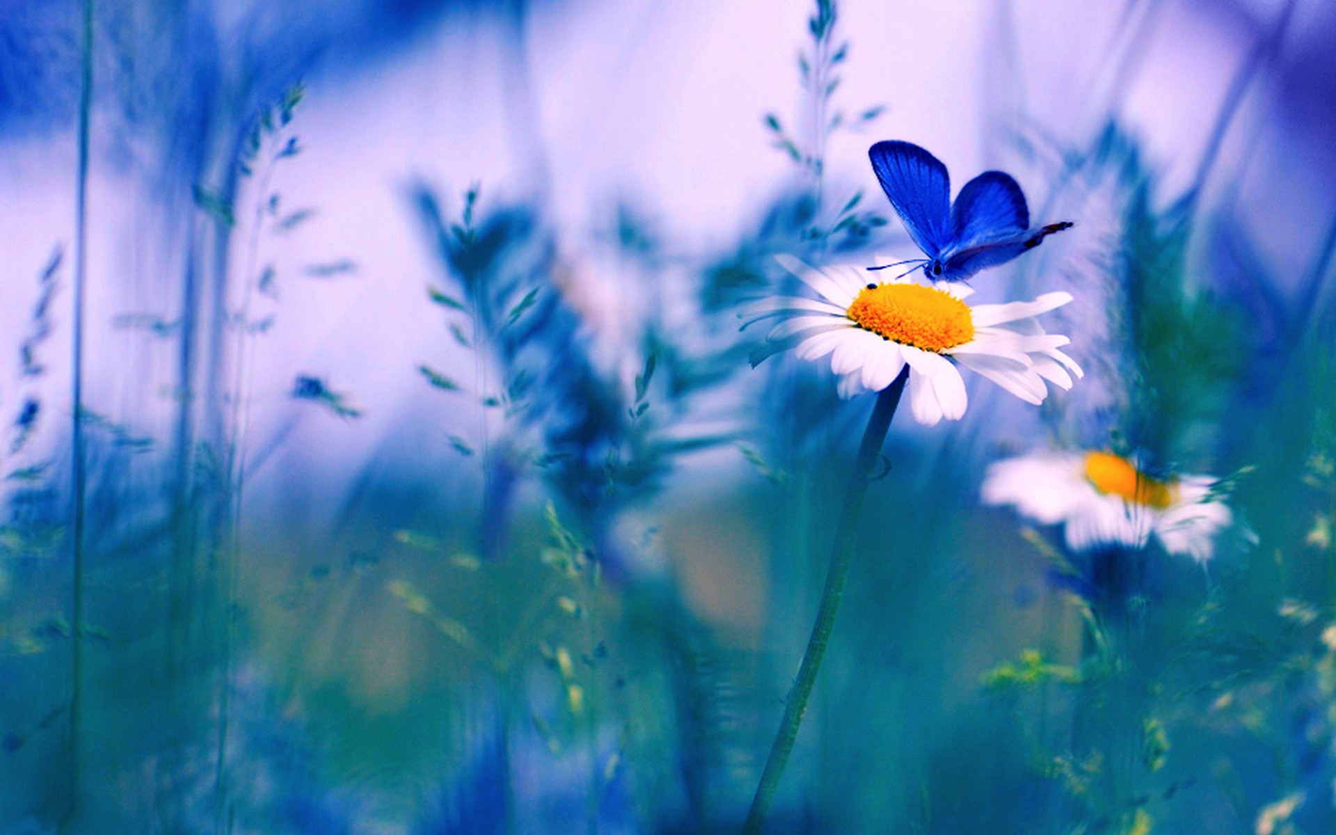 Hd wallpaper spring - Spring Butterfly Wallpaper Desktop 7779 Hd Wallpapers Site