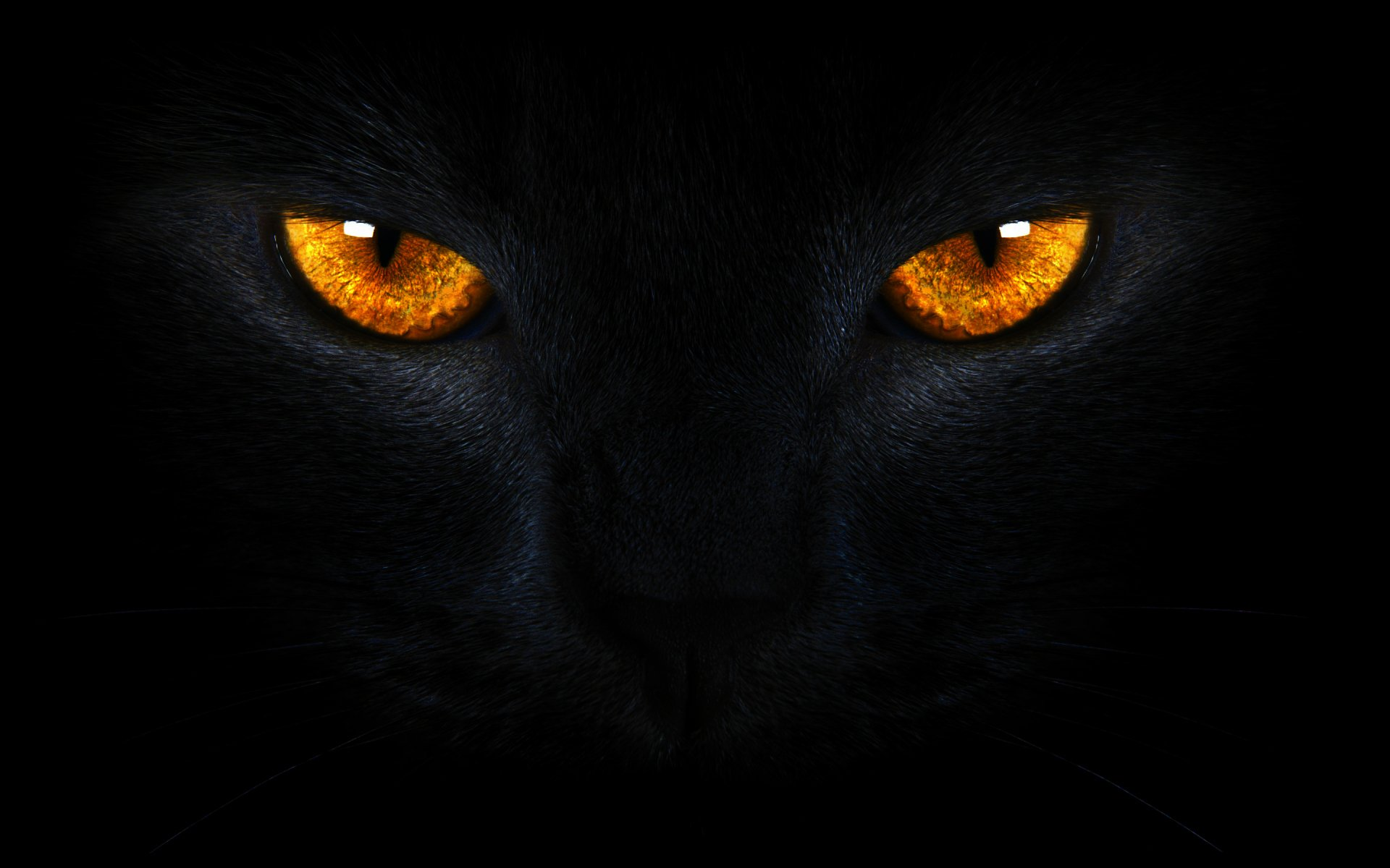 Golden Cat Eyes wallpaper   ForWallpapercom 1920x1200