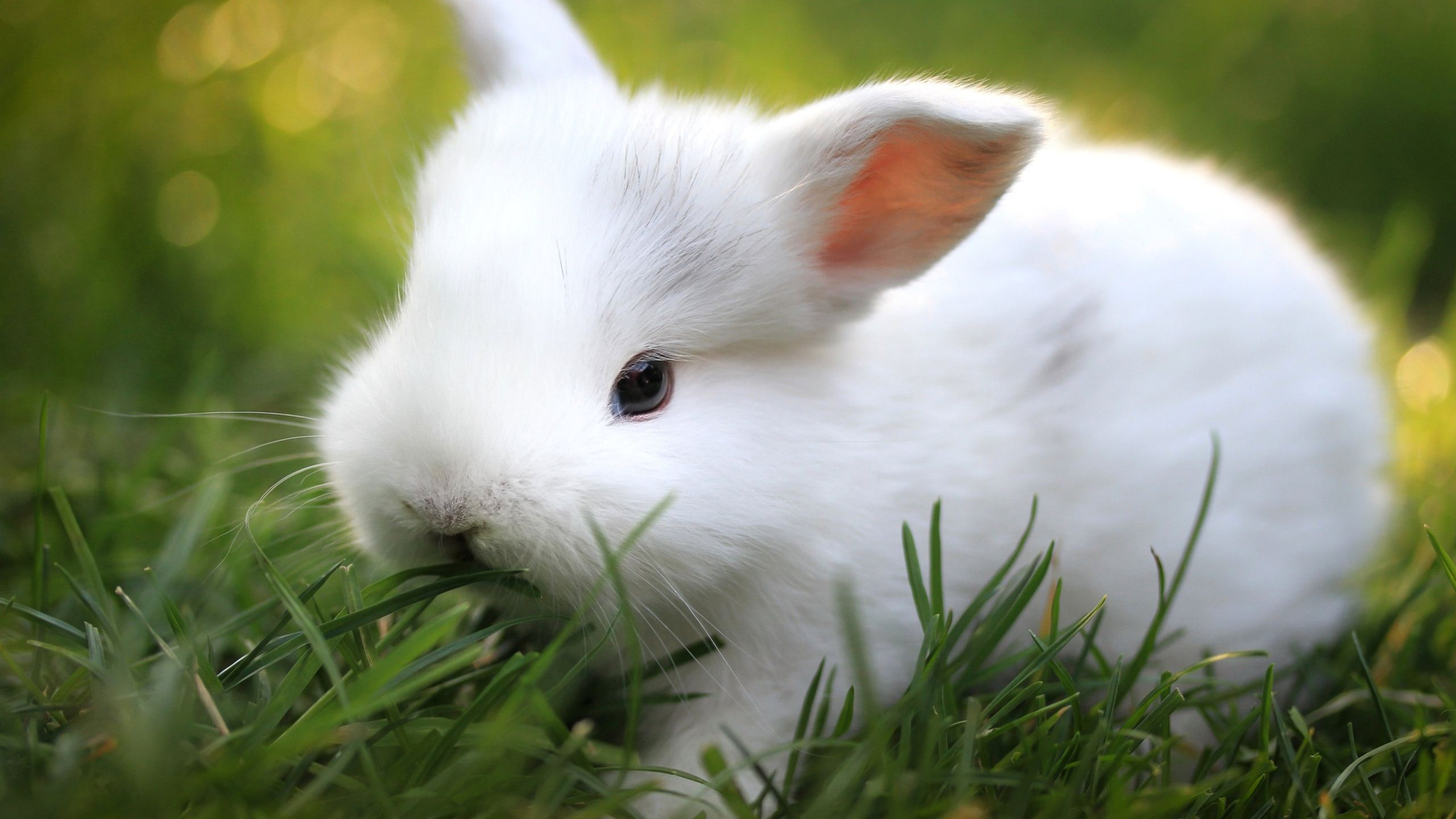 [27+] Cute White Baby Rabbit Wallpaper on WallpaperSafari