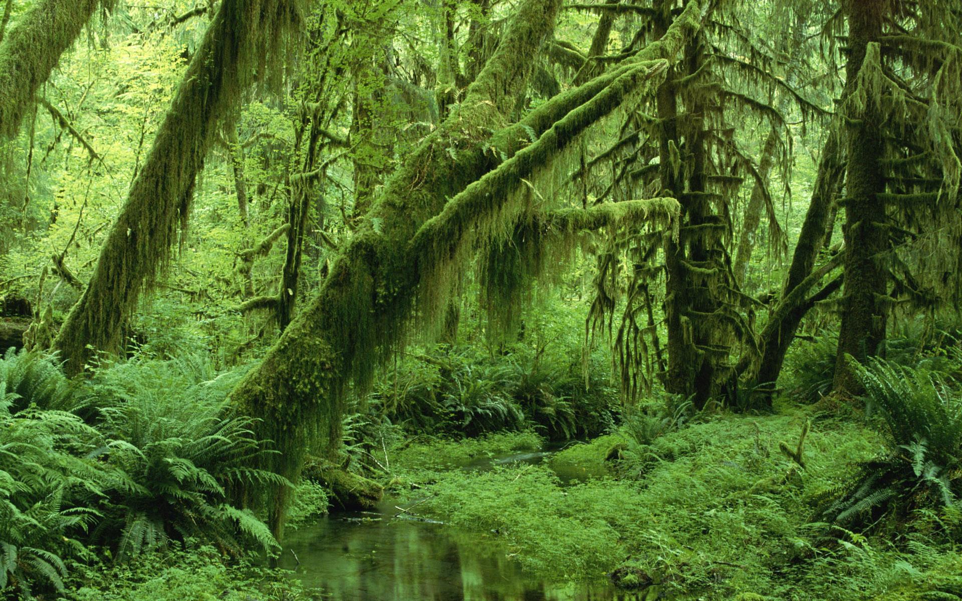 select set as desktop background desktop wallpapers nature forest 1920x1200