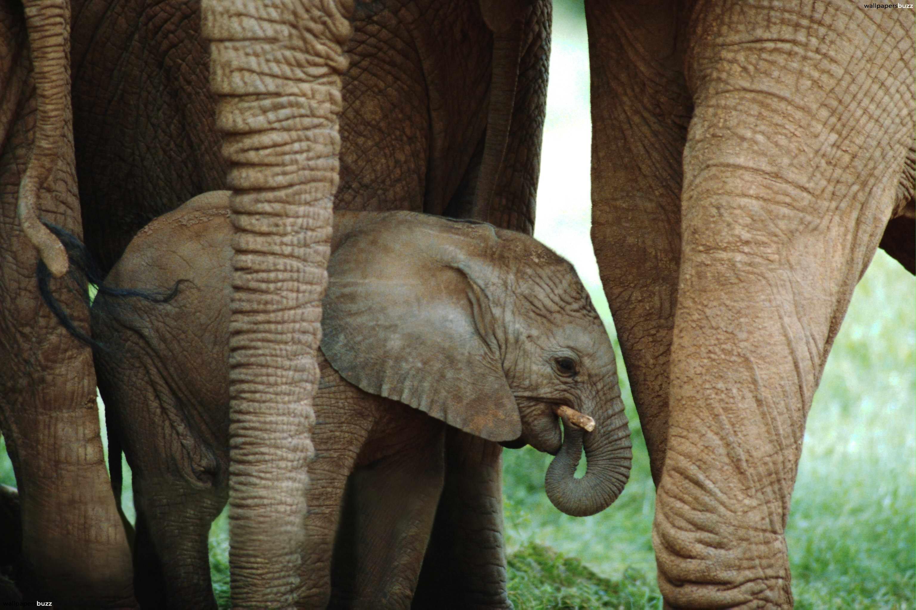 Cute elephant wallpapers wallpapersafari - Baby elephant wallpaper ...