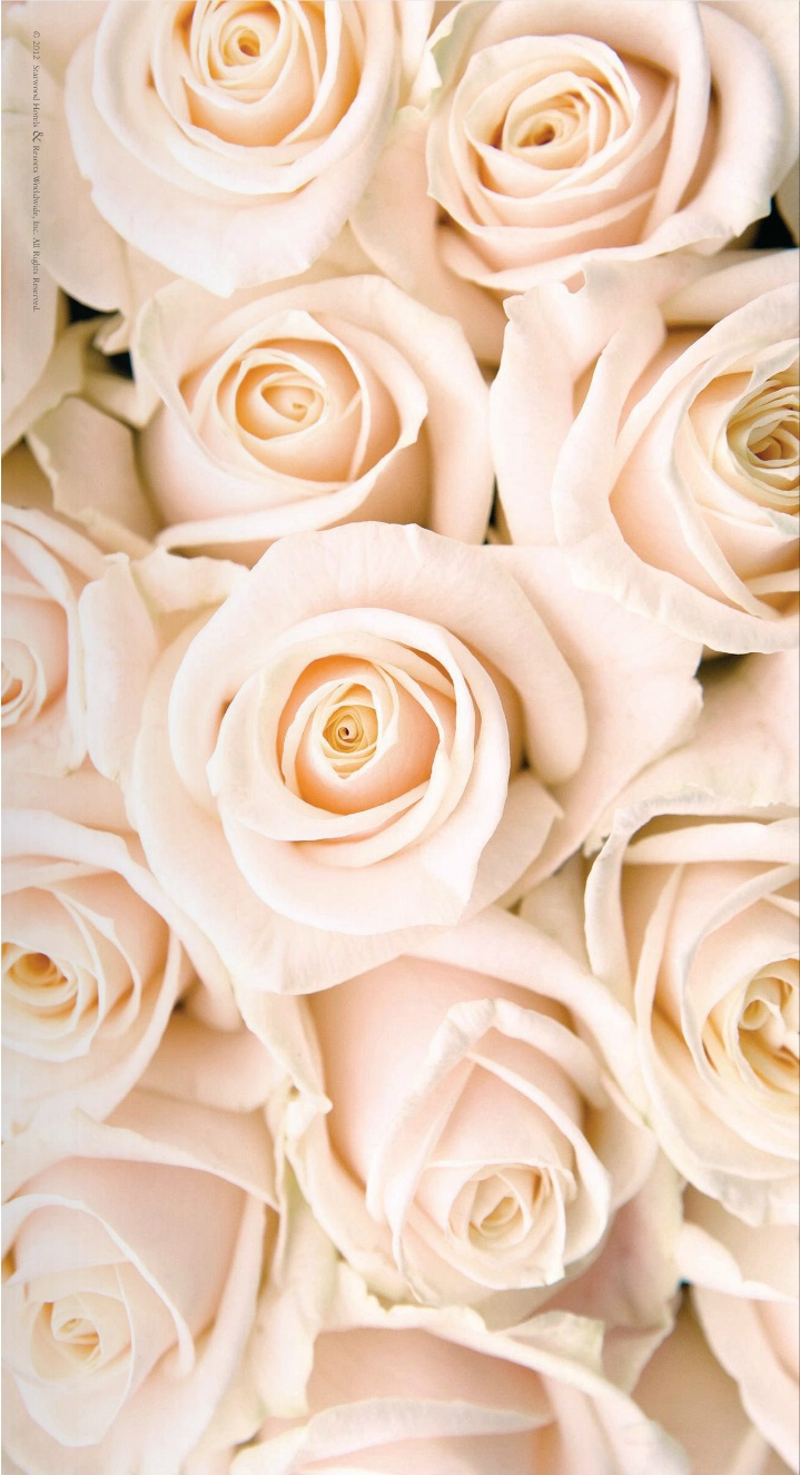96+ Gold Rose Wallpapers on WallpaperSafari