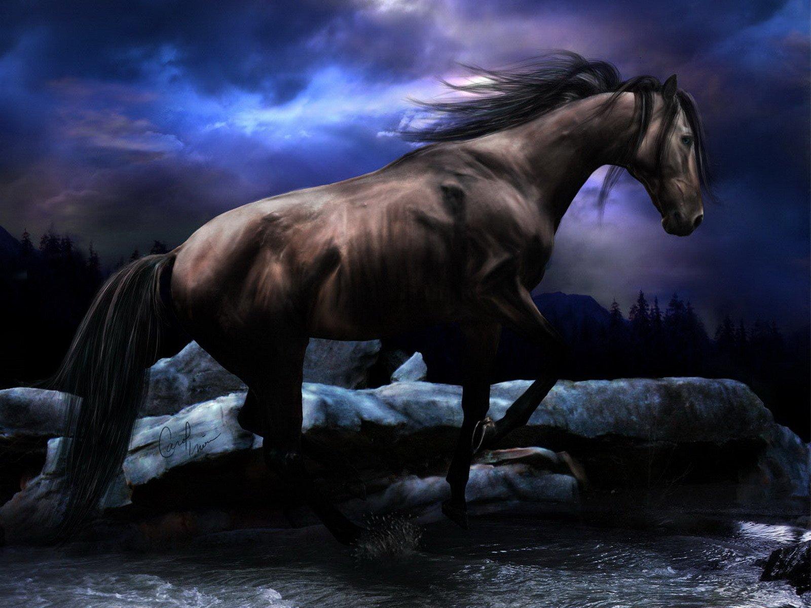 Black horse wallpaper   Animals wallpapers   wallpapers Desktop 1600x1200