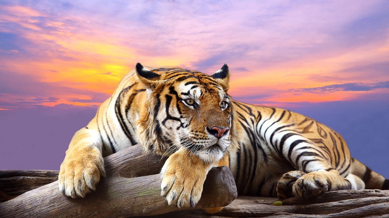 Ultra HD Animals Wallpapers 7BBF617 WallpapersExpertcom 1280x720