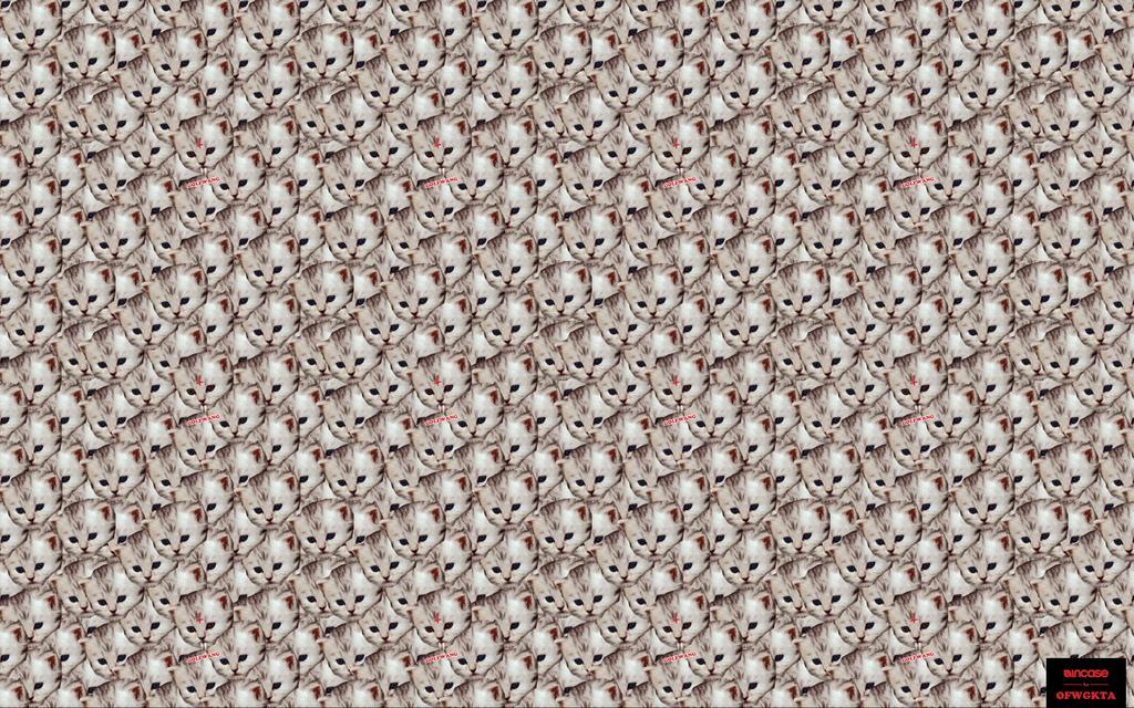 Golf Wang Wallpaper - WallpaperSafari |Catwang Wallpaper