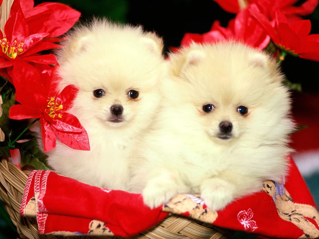 62+] Free Christmas Puppy Wallpaper on