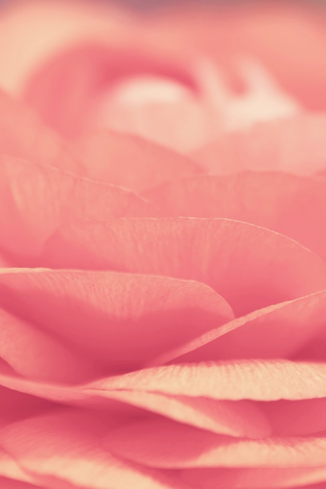 Pink Flower Simply beautiful iPhone wallpapers 640x960
