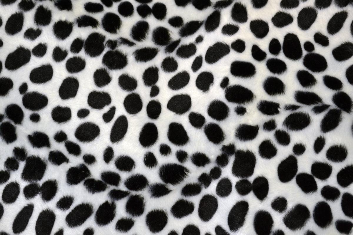 [43+] Dalmatian Print Wallpaper on WallpaperSafari