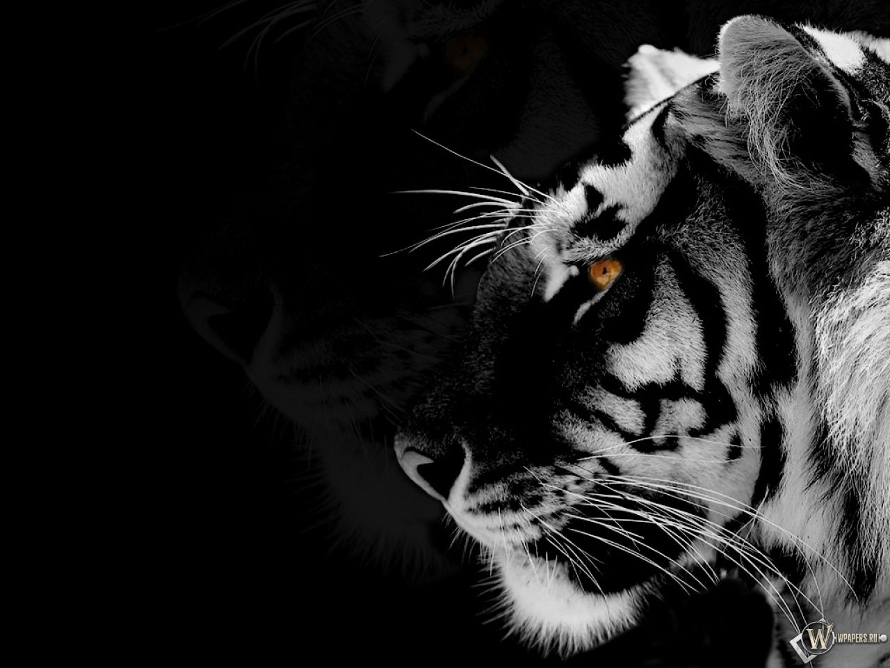 Black and white animal wallpaper wallpapersafari - White and black wallpaper ...