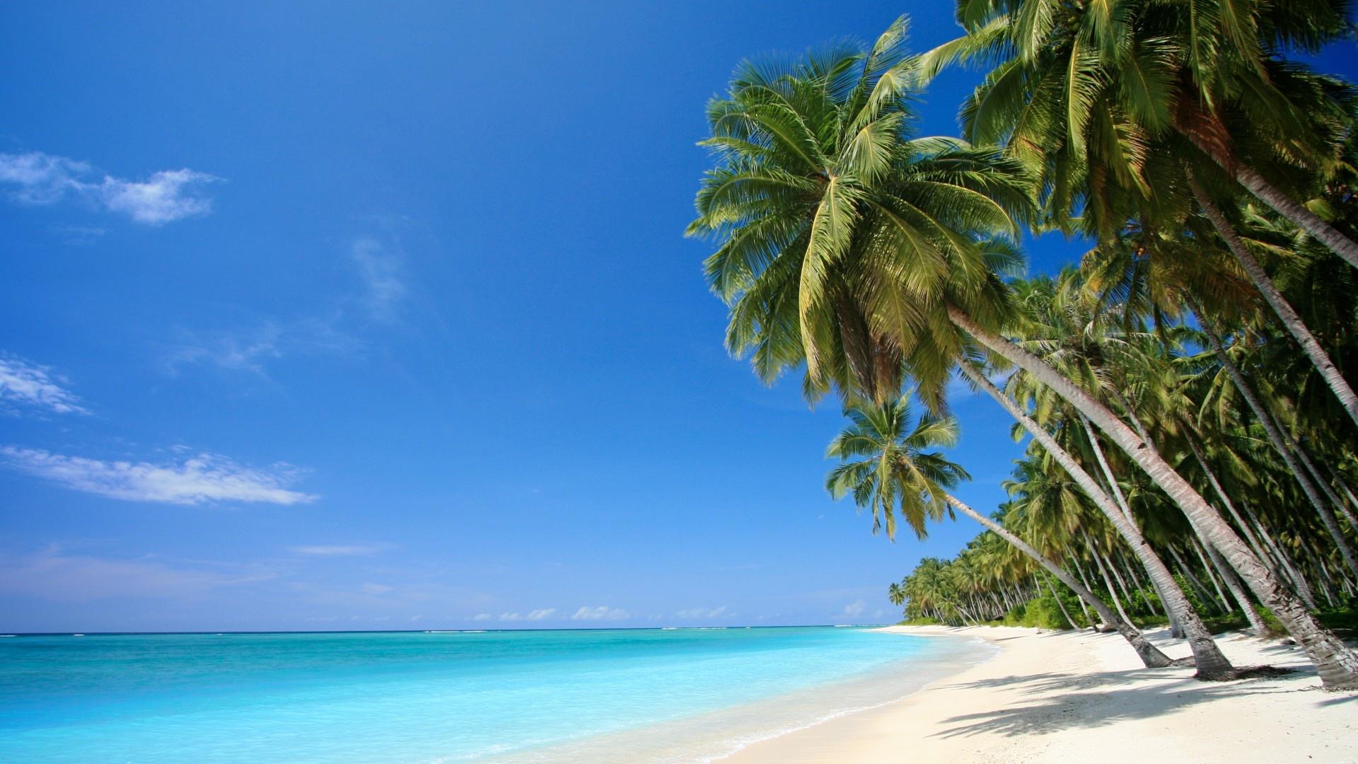 Wallpaper caribbean sea palm beach sea caribbean desktop wallpaper 1920x1080