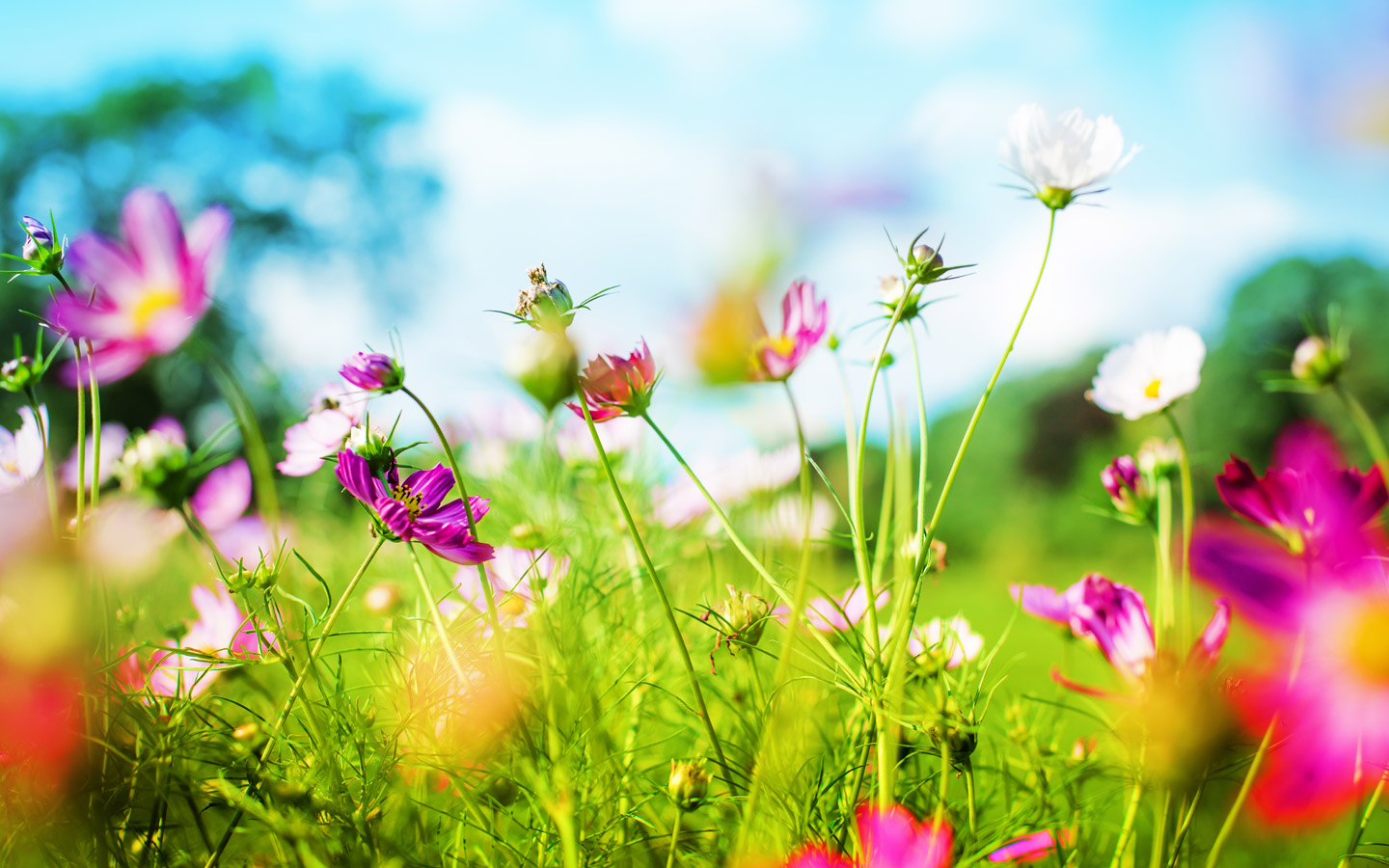 Download Nice Spring Background 1440x900   Full HD Wall 1440x900