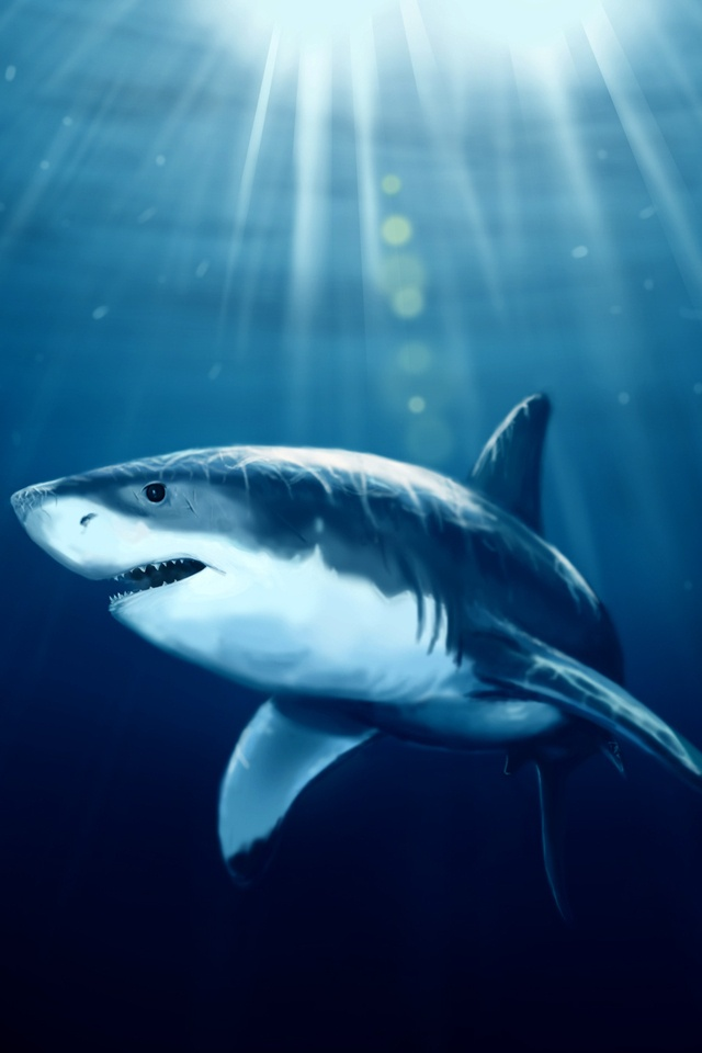 Shark Under the Sun iPhone 4 Wallpaper and iPhone 4S Wallpaper 640x960