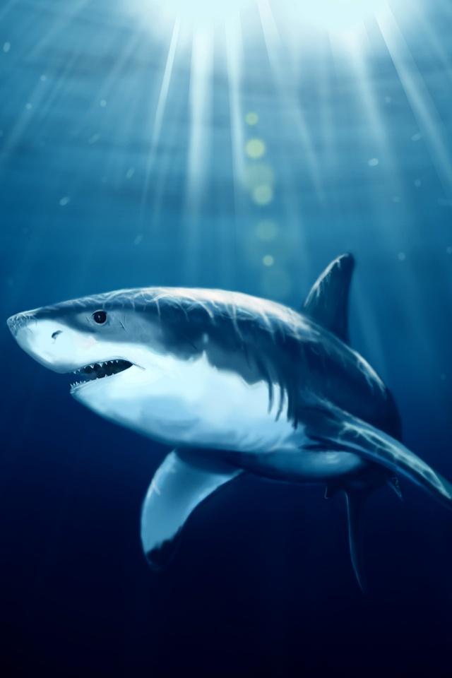 whale shark desktop wallpaper