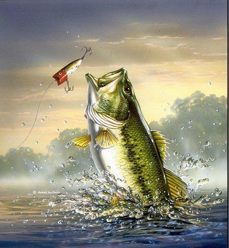largemouth bass is catching a largemouth bass jumping wallpaper 462x500