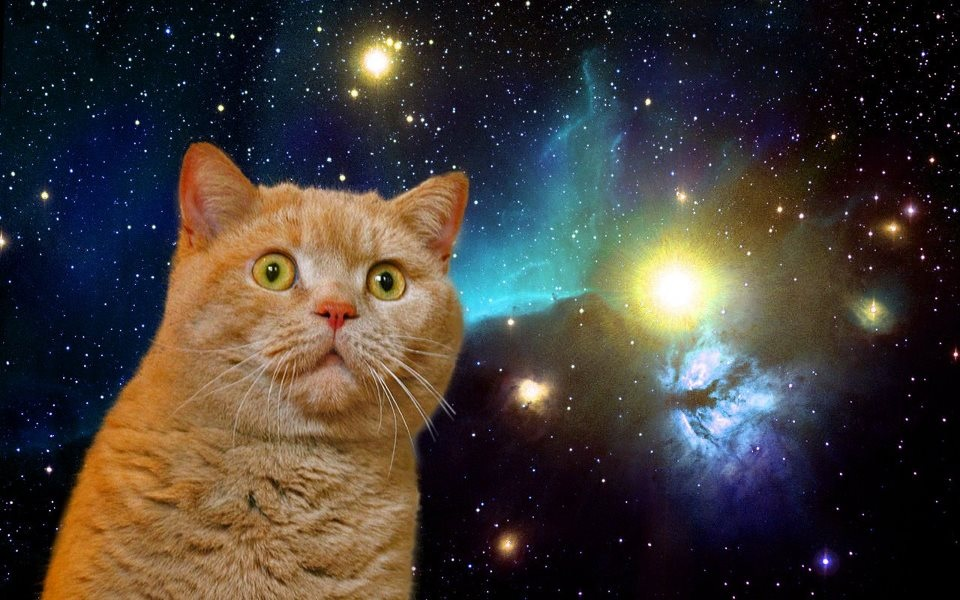 Cat Space Iphone 5 Wallpaper An 960x600