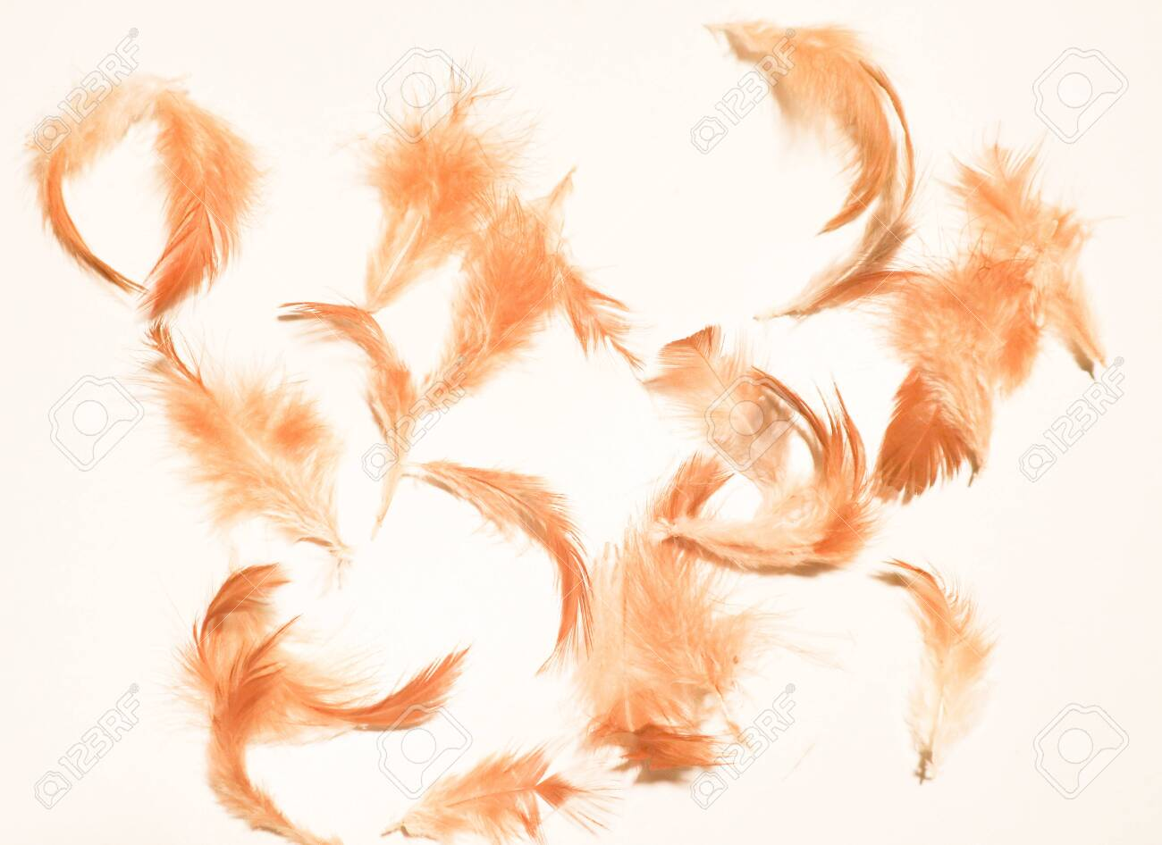 Beautiful Colorful Pink Orange White And Black Feathers Textures 1300x946