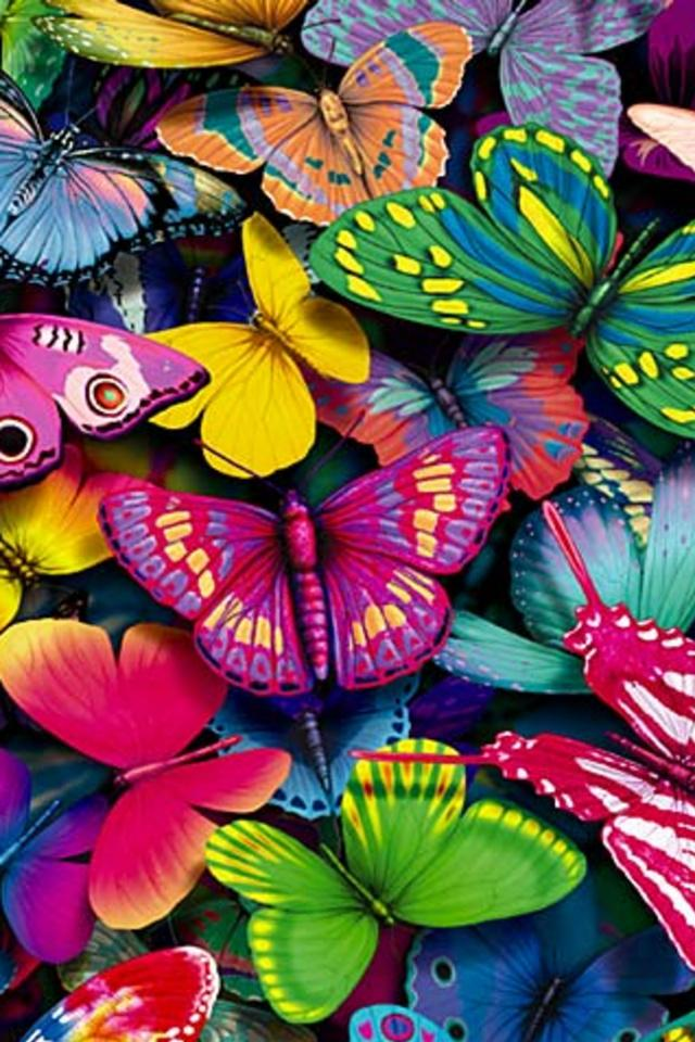 Free Download Colorful Butterfly Wallpaper 640x960 For