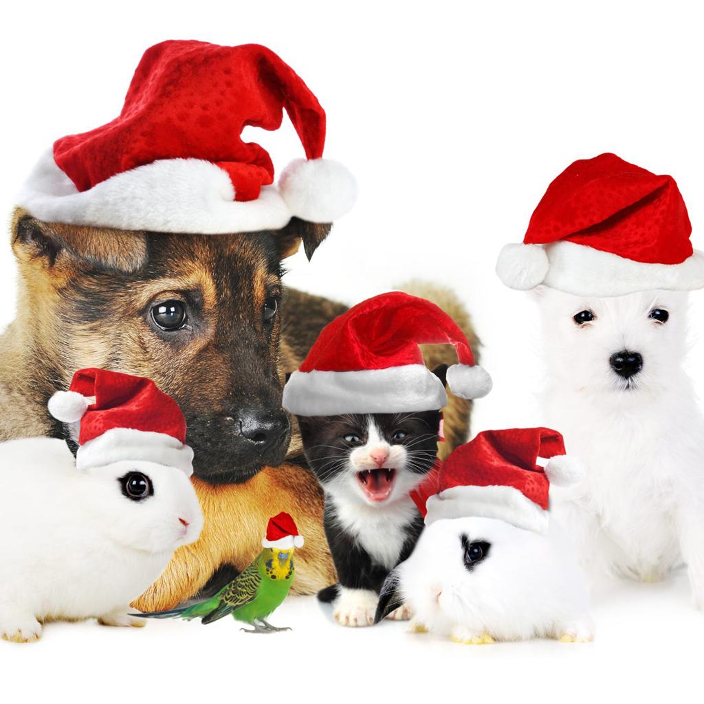 Download Christmas Pets iPad Wallpapers   Christmas Dogs 1024x1024