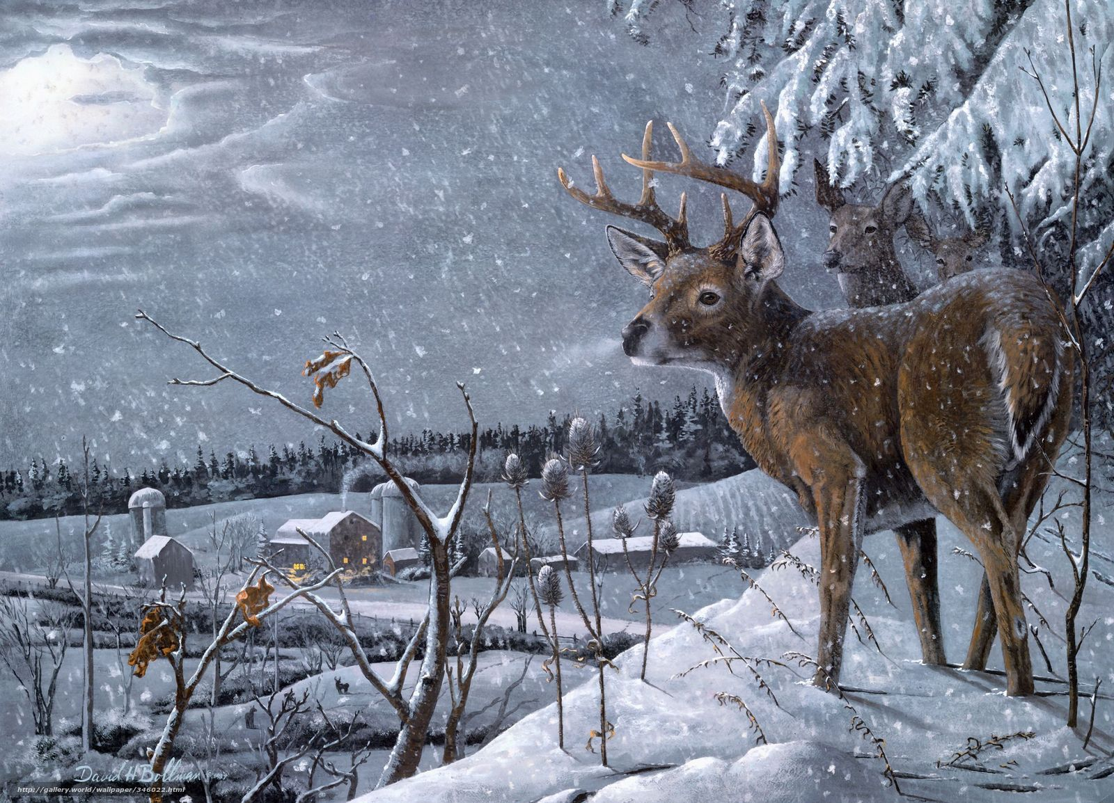 wallpaper david h bollman Deer Winter snow desktop wallpaper 1600x1154