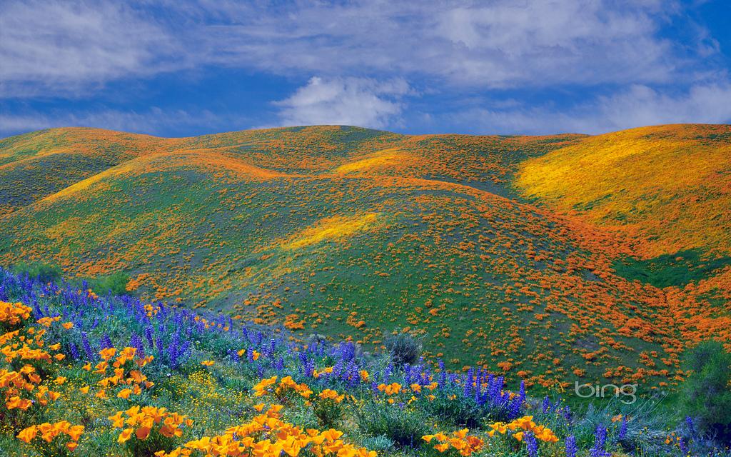 Download Wallpapers Bing Wallpapers Spring Wildflowers
