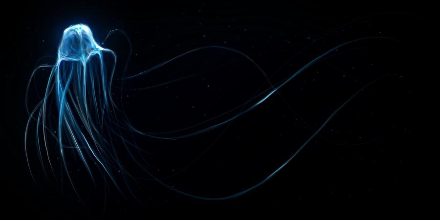 Jellyfish - wallpaper.
